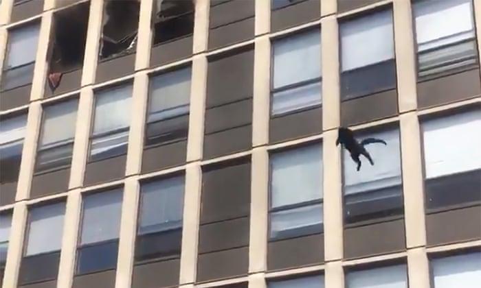 (video) O pisică a supraviețuit miraculos, după ce a sărit de la etajul 5 al unei clădiri în flăcări