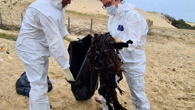 FOTO 16 kilograme de plastic au fost găsite în stomacul unei balene care a eșuat pe o plajă din Franța
