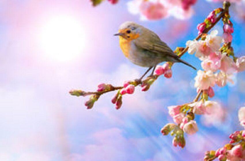 Horoscopul lunii mai. Se anunță evenimente importante în dragoste pentru Capricorn