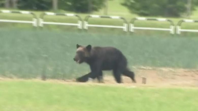 (video) Haos într-un oraș din Japonia provocat de un urs: școli închise, zboruri anulate și oameni baricadați în case