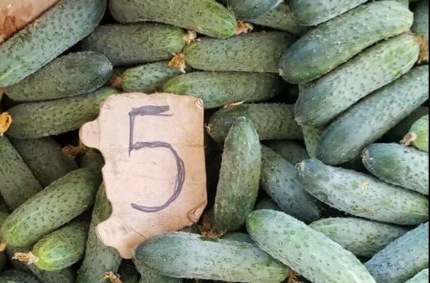Producătorii autohtoni se plâng că nu-și pot vinde roada muncită: Nici cu 5 lei nu se cumpără castraveții