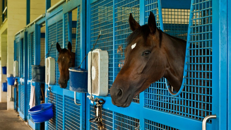 Mii de cai de curse tineri sunt uciși cu cruzime la un abator din Marea Britanie după ce nu mai pot participa la competiții
