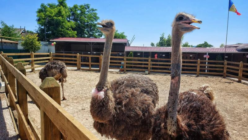 Și-au deschis un zooparc acasă: O familie din Basarabeasca are 30 de specii de păsări și animale, pe care le pot vizita toți doritorii