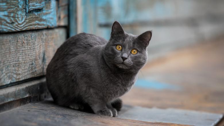 Furie în Taiwan, după ce autoritățile au decis eutanasierea a 154 de pisici de rasă