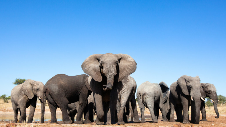(video) Imagini surprinse în Sri Lanka. Elefanții au învățat cum să se ferească de barierele de sârmă ghimpată puse de oameni