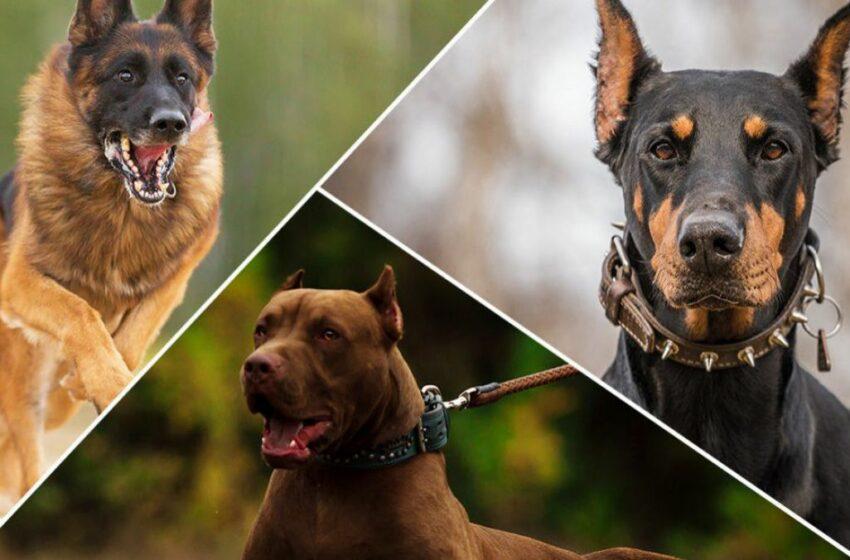 (FOTO) Cele mai scumpe 10 rase de câini din lume