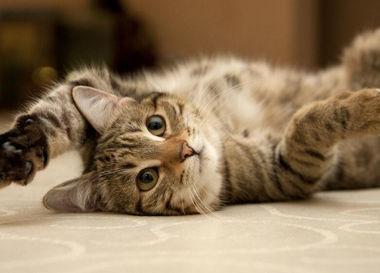 Eroina zilei. O pisică i-a salvat viața stăpânului său, după ce a cerut ajutorul vecinilor