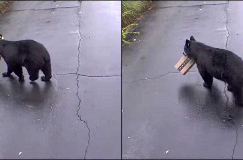 (VIDEO) Un urs a fost surprins în timp ce fura un colet, din faţa unei casei în SUA