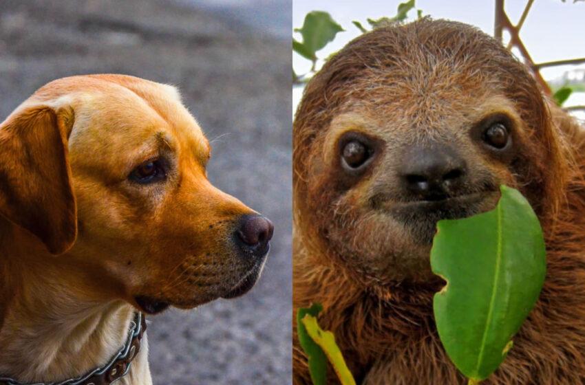 (VIDEO) Un leneș și un câine au legat o prietenie neobișnuită. Imaginile virale au surprins internetul