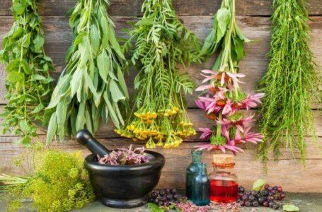 Top 25 plante, care te ajută să ai grijă de sănătate