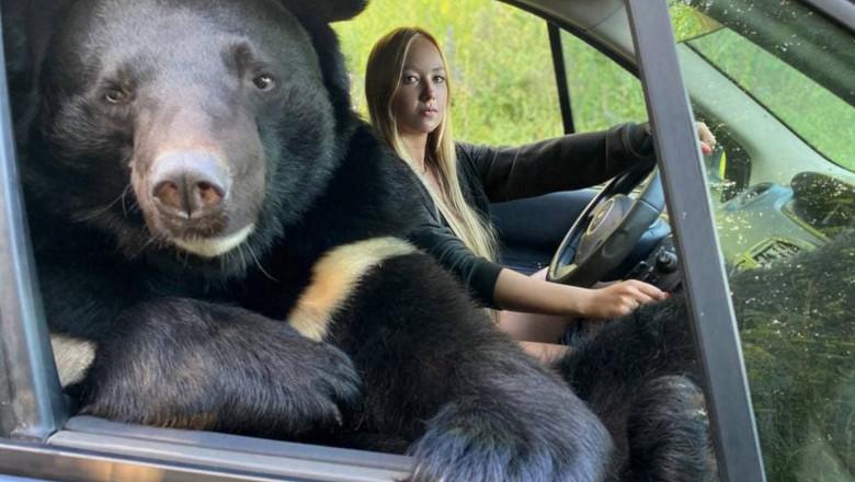 FOTO  Imagini surprinzătoare din Rusia. O tânără călătorește în mașină cu o ursoaică pe locul pasagerului din dreapta