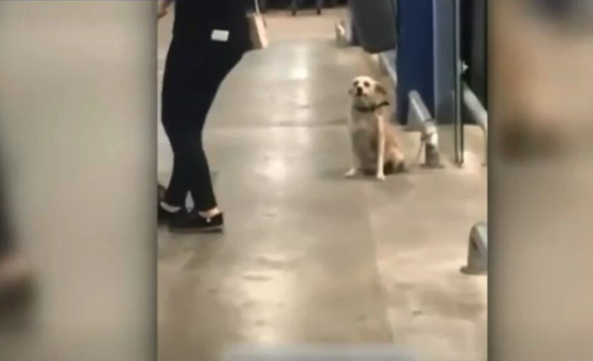(VIDEO) Imagini virale cu un cățel dornic să i se acorde atenție: Salută toți clienții unui magazin